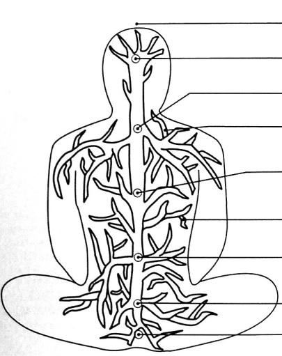 Iekšējais koks no P. Hariharānandas komentētā Bhagavadgītas izdevuma